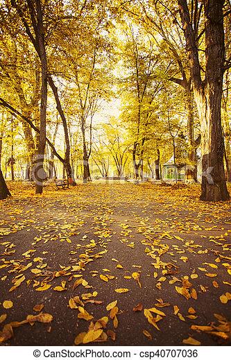 forêt automne, chemin - csp40707036