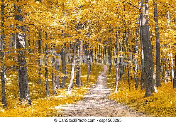 forêt automne - csp1568295