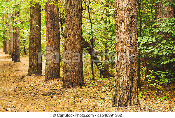 forêt automne, paysage, perspective - csp46391362