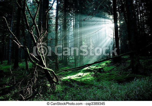 forêt brumeuse - csp3389345