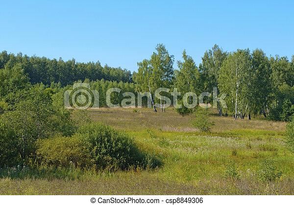 forêt, clairière - csp8849306