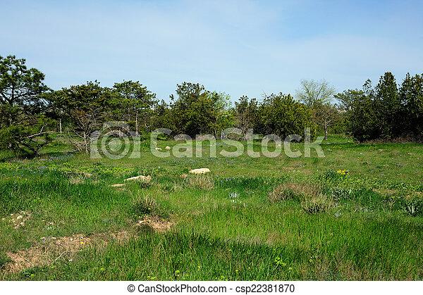 forêt, clairière - csp22381870