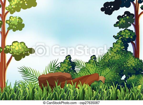 forêt - csp27635087