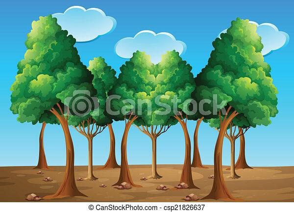 forêt - csp21826637