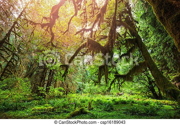 forêt, vert - csp16189043