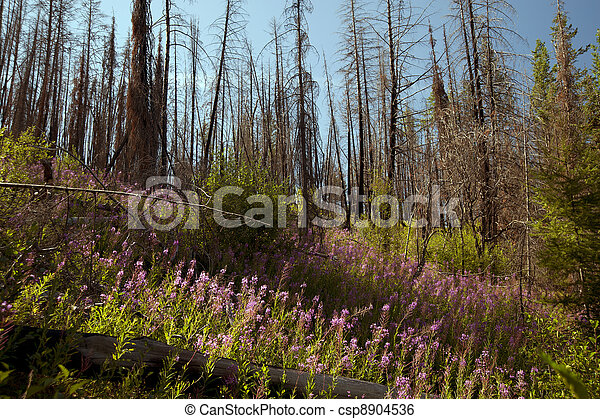 Forest after fire - csp8904536
