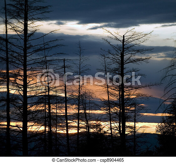 Forest after fire - csp8904465