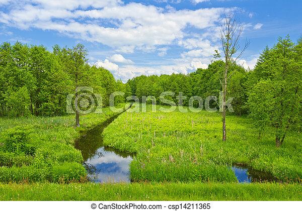 Brook y prado y bosque. - csp14211365