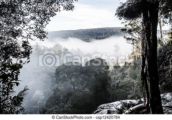 forest at Mt Field National Park, Tasmania - csp12420784
