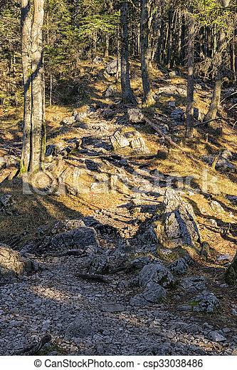 Forest Bavaria Alps - csp33038486