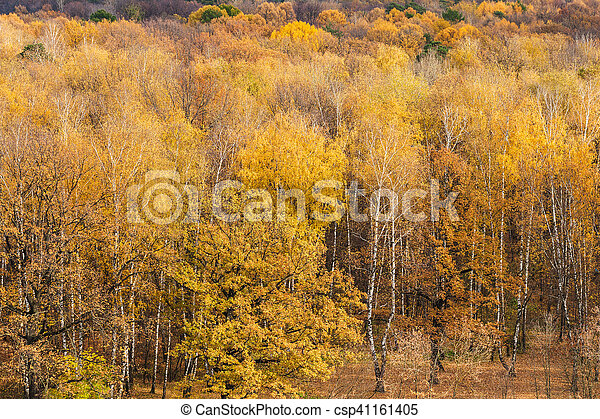 forest clearing on the edge of woods in autumn - csp41161405