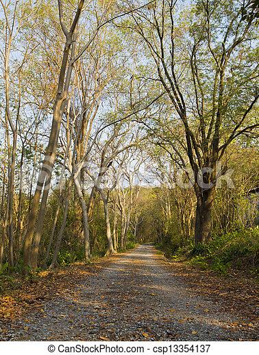 Camino de coche en el bosque. - csp13354137