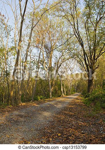 Un auto en el bosque. - csp13153799