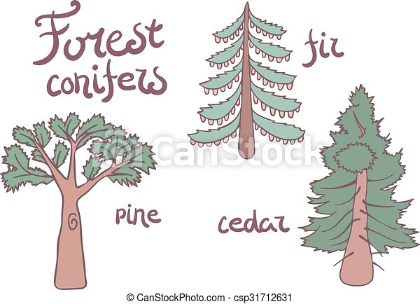 Forest conifer trees set. Isolated plan - csp31712631