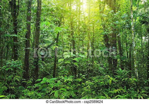 forest., dicht - csp2589624