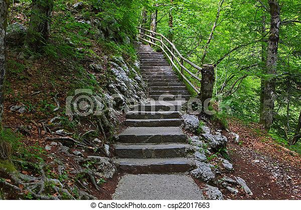 Escaleras en el bosque verde. - csp22017663