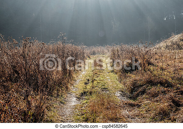 forest field road in the rays of the rising sun, early morning in Russia, Ural district forest - csp84582645
