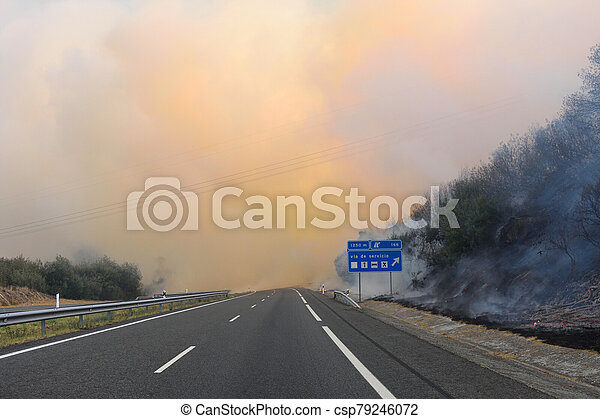 Forest fire on the road - csp79246072