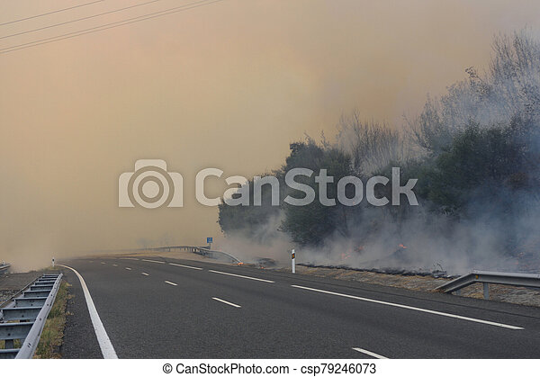 Forest fire on the road - csp79246073