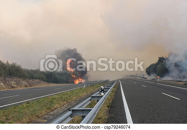 Forest fire on the road - csp79246074