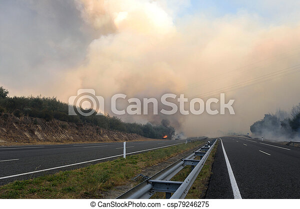 Forest fire on the road - csp79246275