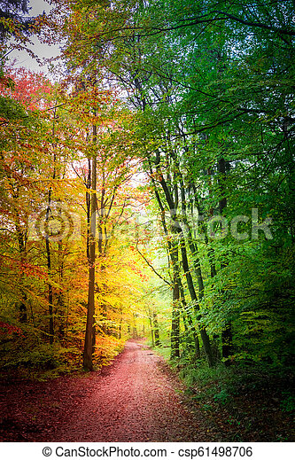 Forest full of color in the fall, Poland - csp61498706