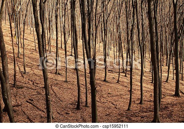 Forest in autumn - csp15952111