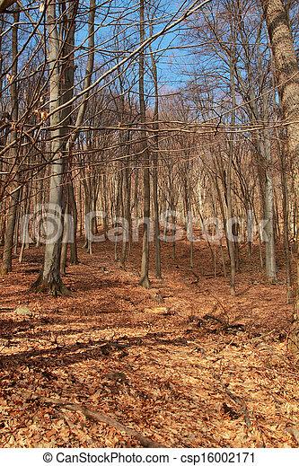 Forest in autumn - csp16002171