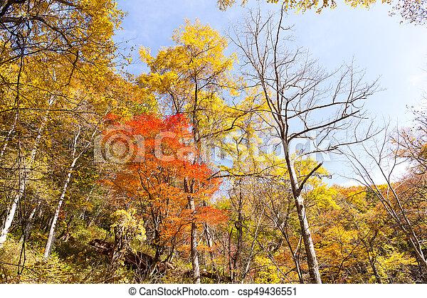 Forest in Autumn season - csp49436551