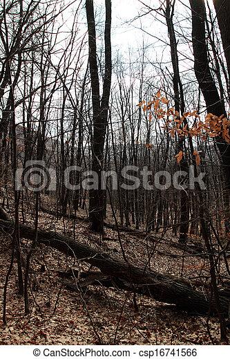 Forest in autumn - csp16741566