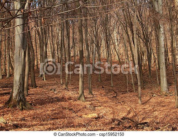 Forest in autumn - csp15952150