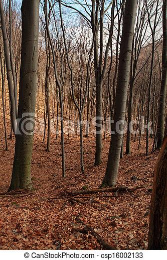 Forest in autumn - csp16002133
