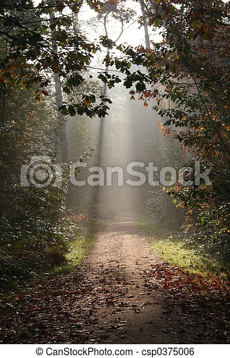 Forest in Fall - csp0375006