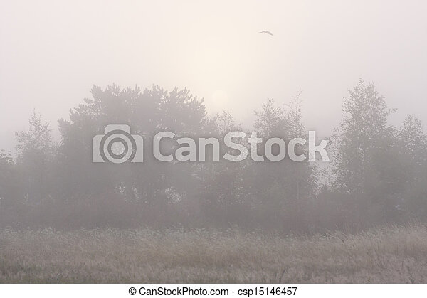 Forest in mist and flying bird - csp15146457