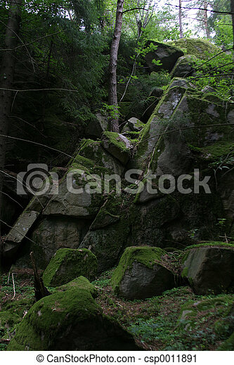 Forest in Norway - csp0011891