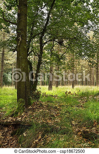 Forest in summer with oak tree - csp18672500