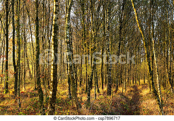 Forest in the autumn (fall) - csp7896717