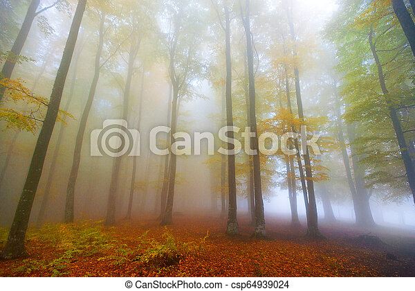 forest in the autumn - csp64939024