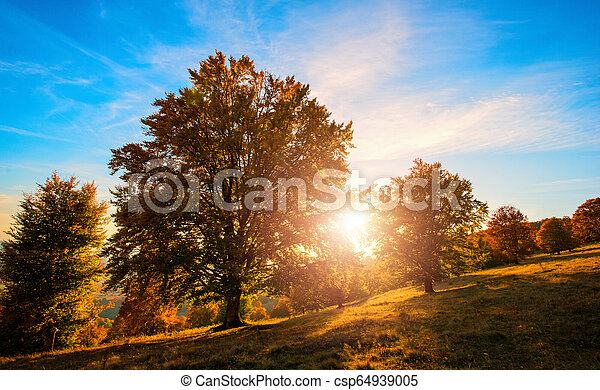 forest in the autumn - csp64939005