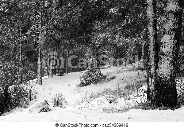 Forest in the snow - csp54389419
