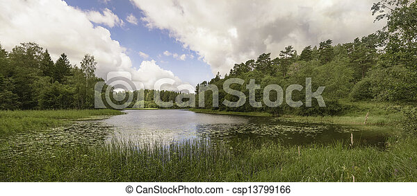 Forest lake. - csp13799166