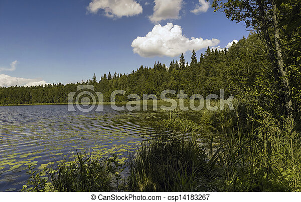 Forest lake. - csp14183267