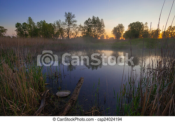 Forest lake - csp24024194