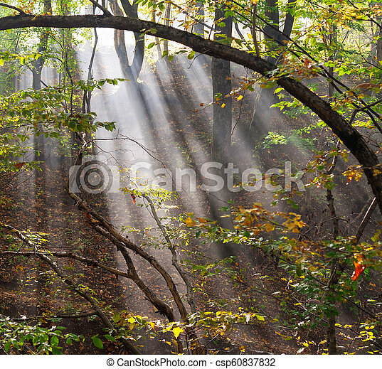 forest landscape with sun rays in the smoke - csp60837832
