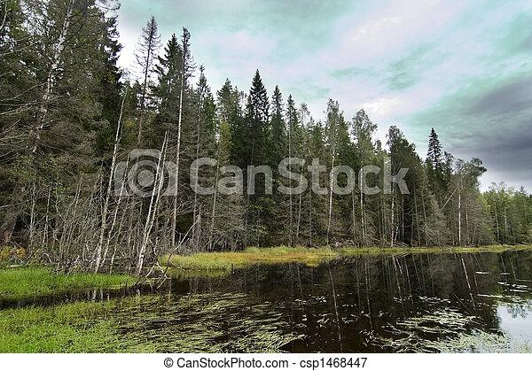 Forest Marsh - csp1468447