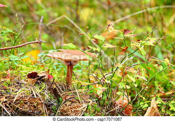 Forest mushroom in a green moss - csp17071087