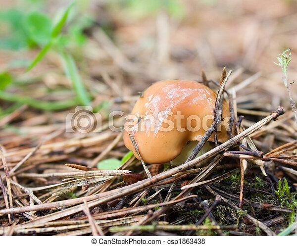 forest mushroom - csp1863438