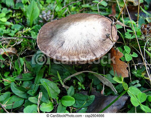 forest mushroom - csp2604666