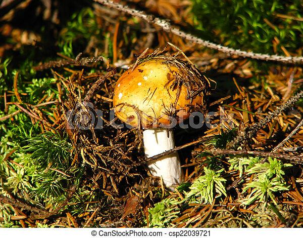 forest mushroom - csp22039721