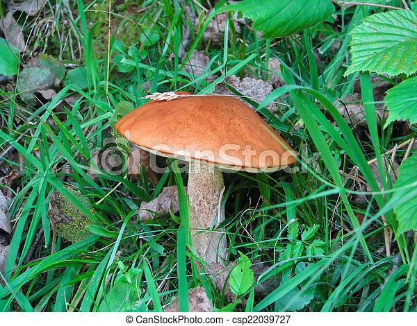 forest mushroom - csp22039727